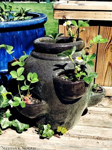 "Various images with different ideas for containers used for gardening including buckets, outdoor planters, a horse trough, and plastic totes. Image overlay says ""Container Gardening. Everything You Need to Know to Raise Your Own Food""."