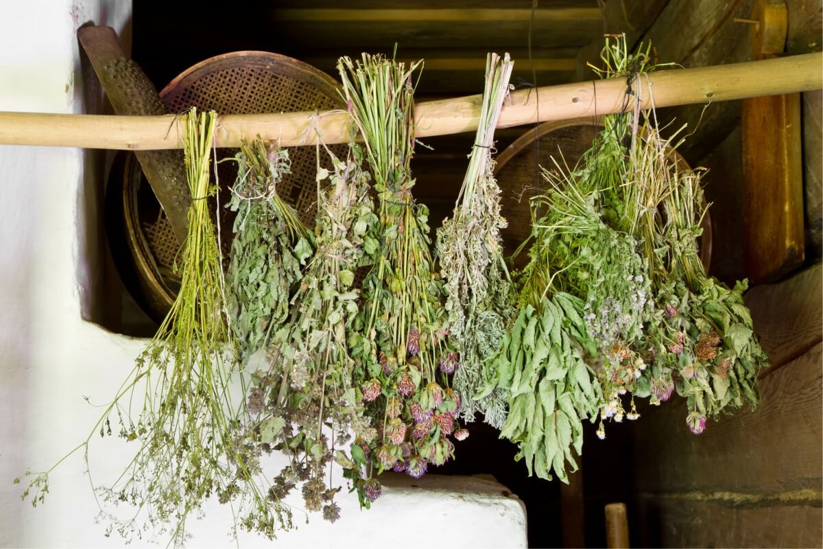 dried herbs in Mason jar on counter