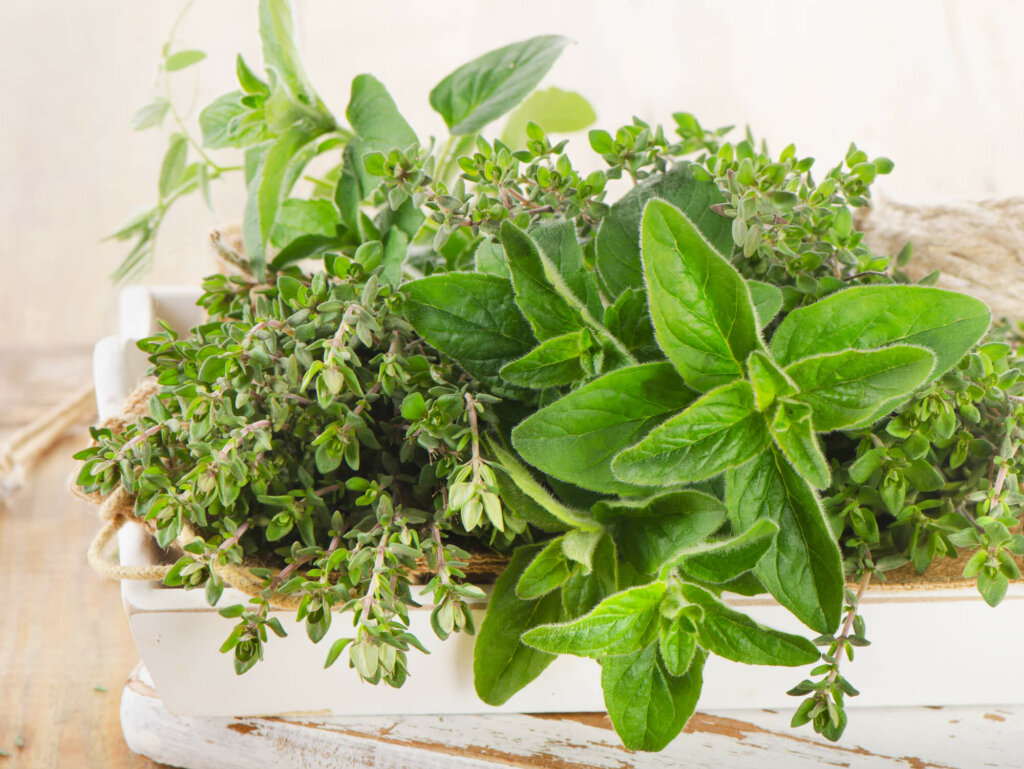 Herbs growing in a box.