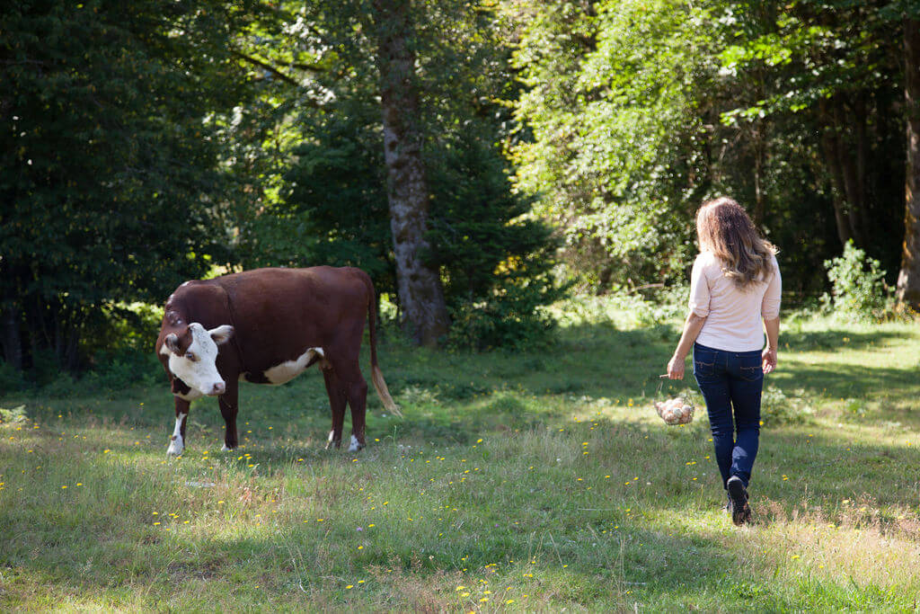cattle in wooded pasture