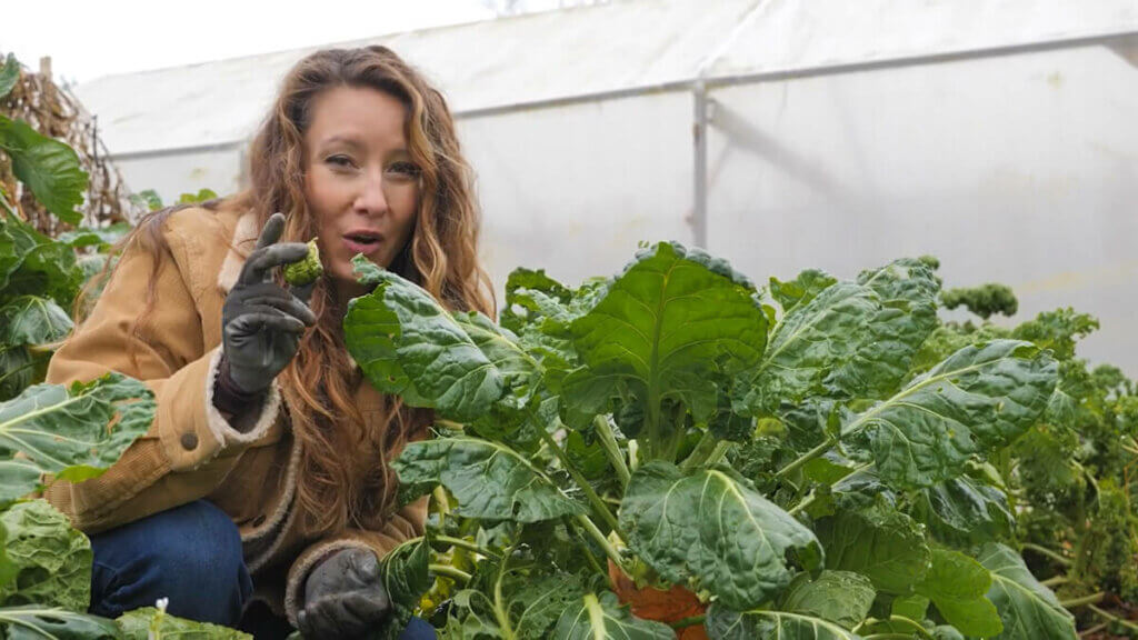 A woman crouched by a large brussel sprout plant holding up a Brussel sprout.