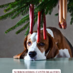 Picture of a dog looking sad under a Christmas tree. Pinterest pin for dealing with emotions during the holidays.