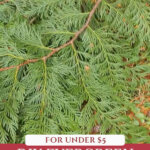 Pinterest pin with an image of evergreen boughs cut on the ground.