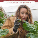 A woman holding up a Brussel sprout kneeling next to a large plant for a Pinterest pin about which vegetables can winter over in the garden.
