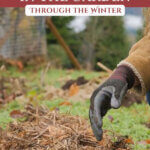 Pinterest pin with an image of hands adding a layer of mulch over plants in the garden during the winter.