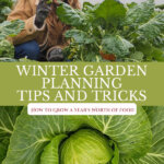 Pinterest pin with images of a winter garden for a Planning Garden in Winter post.