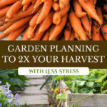 Pinterest pin with two images, one of a giant bunch of harvested carrots. The second of raised garden beds in a garden.