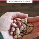 "Pinterest pin with a hand holding bean seeds. Text overlay says, ""Where to buy heirloom seeds""."