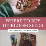 "Pinterest pin with images of seed packets and a hand holding seeds. Text overlay says, ""Where to buy heirloom seeds"""
