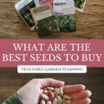 "Pinterest pin with images of seed packets and a hand holding seeds. Text overlay says, ""What are the best seeds to buy?"""