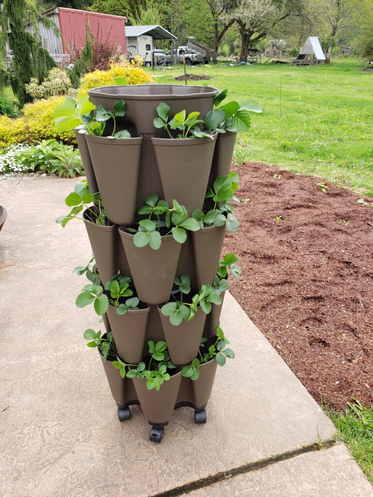 Vertical container planter with strawberries on cement patio