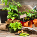Pinterest pin with an image of a potting bench and plant starts.
