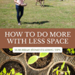 Pinterest pin with an image of a woman in a pasture with a cow, and seedlings started in small pots.