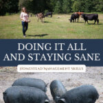 Pinterest pin for homesteading time management with an image of a woman out in the pasture with cows, and an image of four guinea hogs.