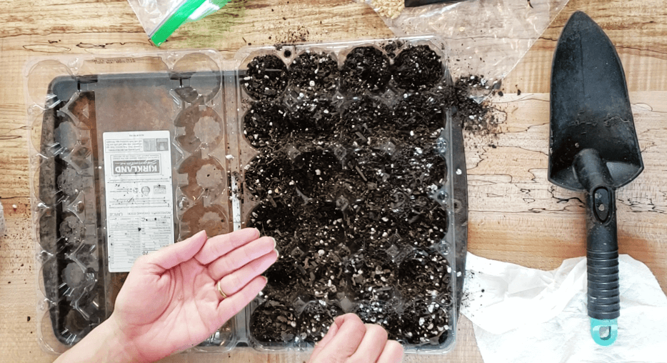 plastic egg carton with dirt on tray for seeds