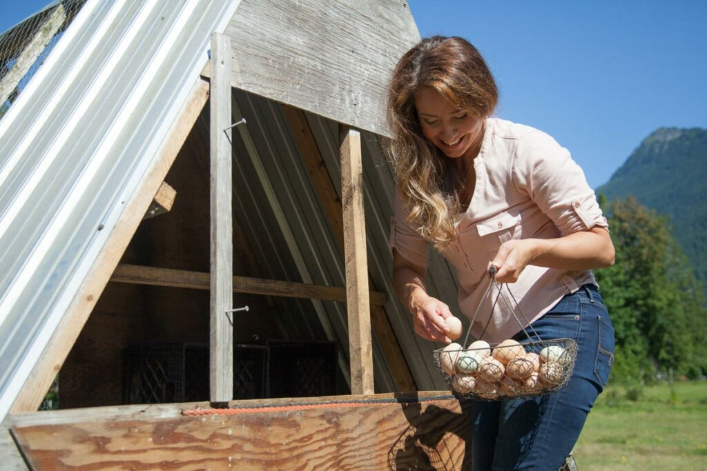A woman gathering farm fresh eggs from a portable chicken tractor.