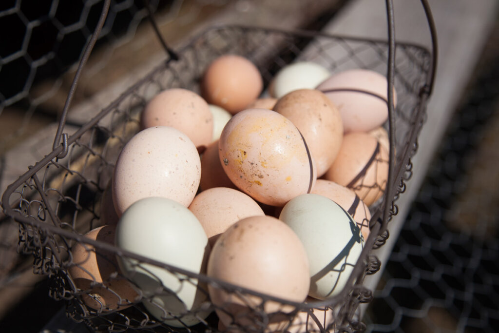 An upclose image of a wire basket filled with farm fresh eggs.
