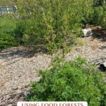 Pinterest pin for growing food forests with photos of a food forest.