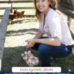 A Pinterest pin for how to raise backyard chickens for eggs with an image of a woman crouched inside a portable chicken tractor holding a basket of eggs.