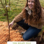 Pinterest pin for how to plant fruit trees with images of fruit trees.
