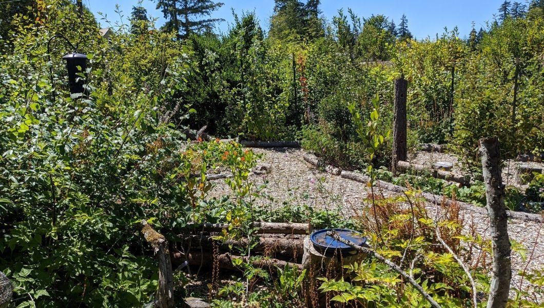 A food forest garden.