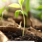 Pinterest pin for beginning gardener tips with an image of seedlings.