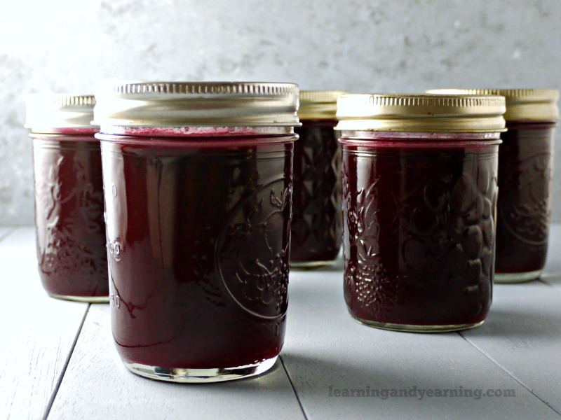 Multiple jars of elderberry jelly in jars sitting on a counter.
