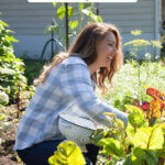 Pinterest pin for how to buy a homestead. Image of a woman harvesting produce from the garden.