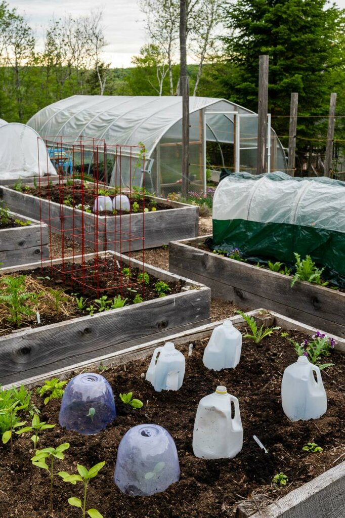 Photo of a garden with 5 raised beds and a greenhouse in the background.