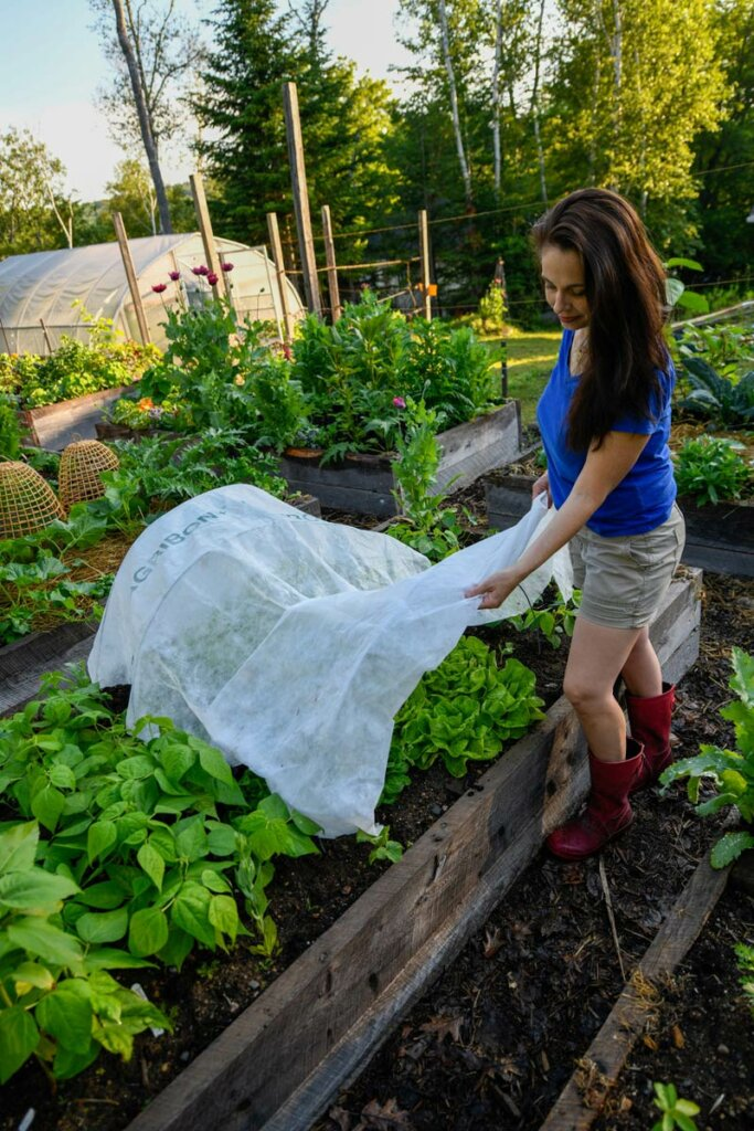 A woman putting a row cover over her crops in a raised garden bed.