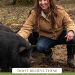 Pinterest pin about homesteading myths. Photos of a woman crouched down by pigs.