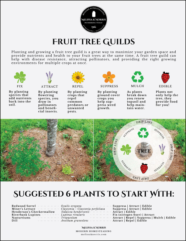 A page describing what a fruit tree guild is, plus a diagram of where to plant each specific kind of plant.