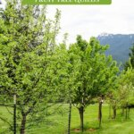 Pinterest pin for how to grow a fruit tree guild or an edible food forest. Image of a fruit tree with blossoms and a fruit tree guild below it.