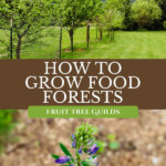 Pinterest pin for how to grow a fruit tree guild or an edible food forest. Images of an orchard and companion plants.