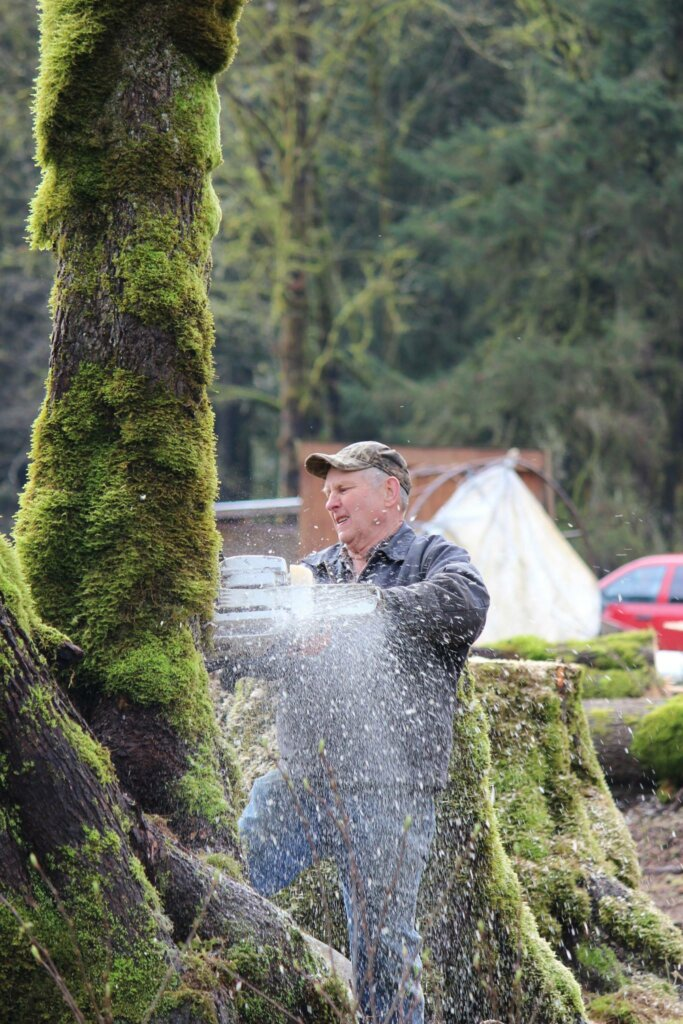 An older man with a chainsaw cutting down a tree.
