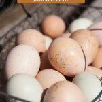 Pinterest pin on egg preservation methods. Image of a basket of eggs.