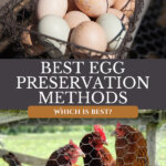 Pinterest pin on egg preservation methods. Images of a basket of farm fresh eggs and an image of chickens.