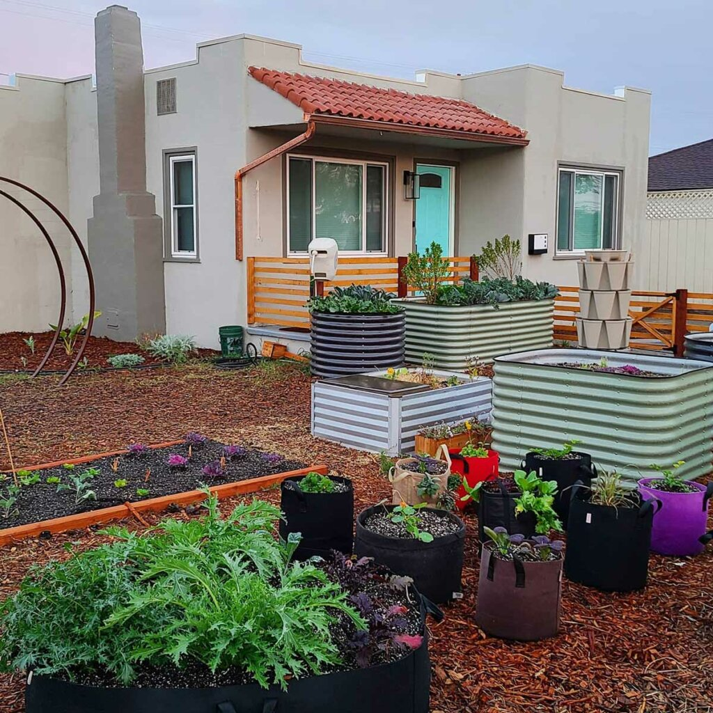 Image of a backyard garden with raised beds and grow bags.