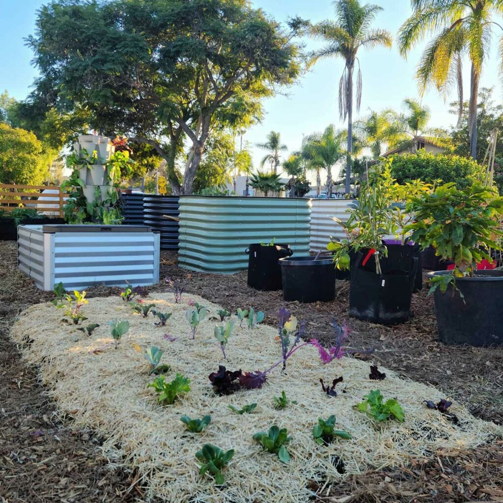 Image of a backyard garden when crops in the ground, in raised beds and in grow bags.