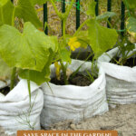 A Pinterest pin on growing in grow bags in the garden. Image of cucumbers growing in grow bags.
