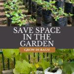 A Pinterest pin on growing in grow bags in the garden. Images of strawberry plants and cucumbers growing in grow bags.