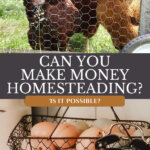 Pinterest pin on how to make money homesteading. Image of farm fresh eggs in a basket and chickens in a mobile chicken coop.