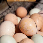 Pinterest pin on how to make money homesteading. Image of farm fresh eggs in a basket.