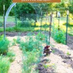 Pinterest pin for using woodchips in the garden. Image of a garden that's been mulched with woodchips.
