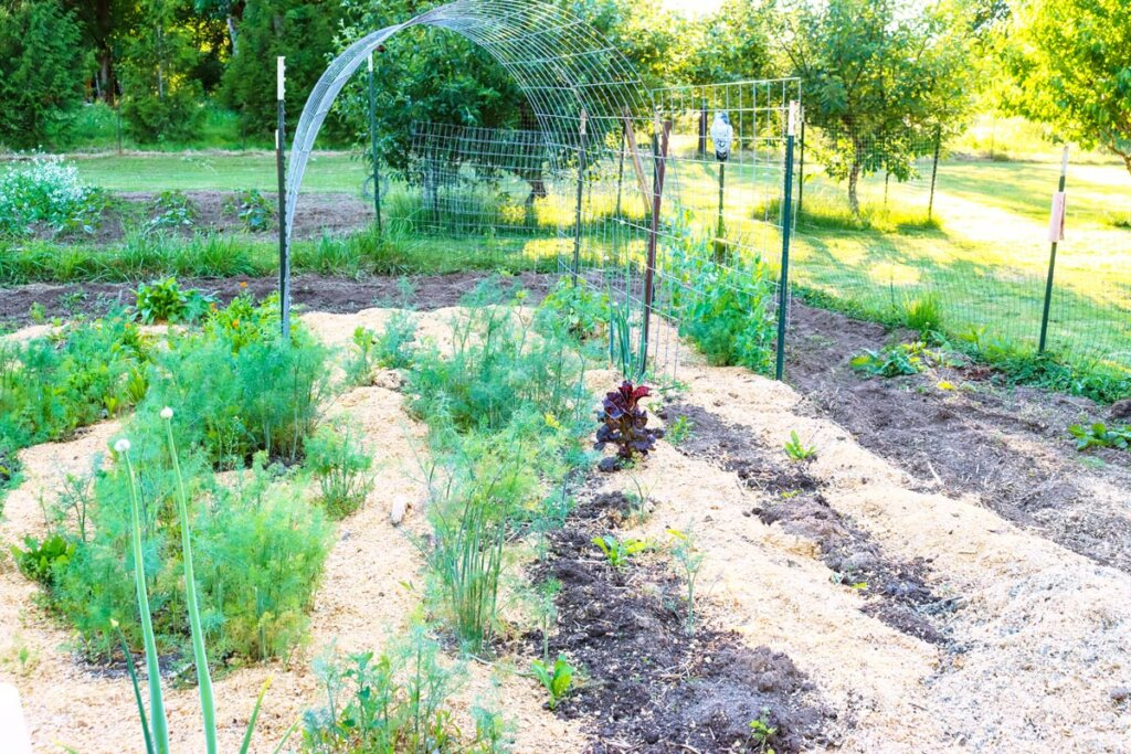 A photo of a garden that has been mulched with woodchips.