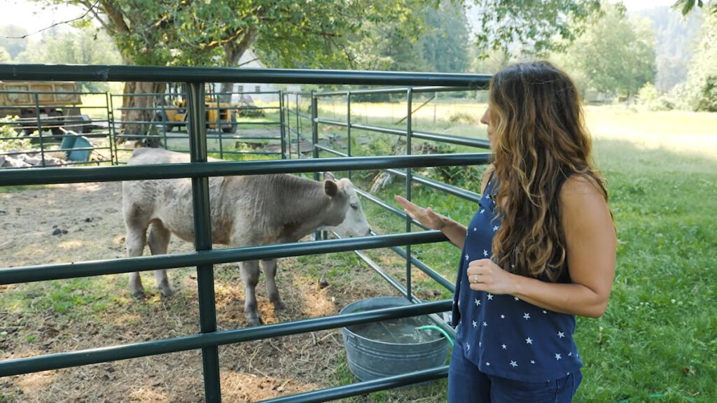 A woman standing next to a baby cow in a pen.
