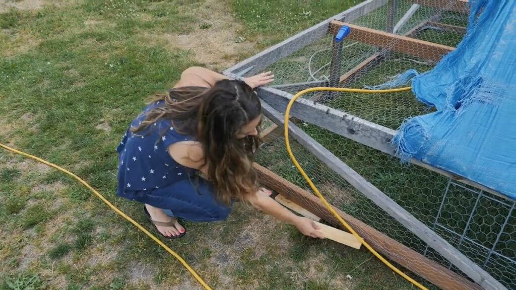 A woman shoring up a hole with a piece of wood so baby chicks cannot escape the mobile chicken coop.