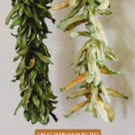 Pinterest pin for how to make leather britches. Image of strung green beans.