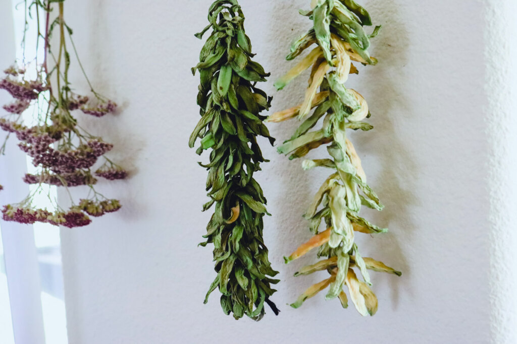 Leather britches, or dried green beans, strung and hanging against a wall.