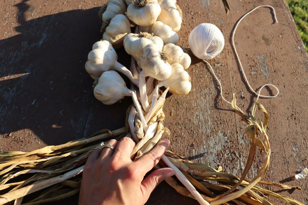 A woman's hands showing how to braid garlic.